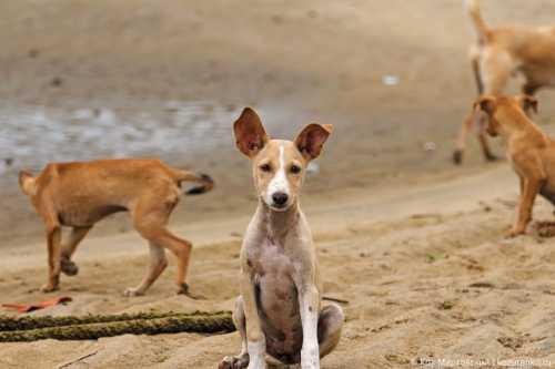 щенок ластится к чужим: стоит ли хозяевам беспокоиться