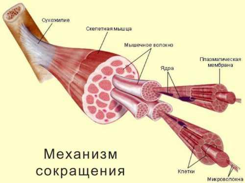 лазеркоагуляция сетчатки: причины назначения и послеоперационный период